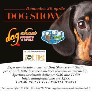 dog Show 1000x1000